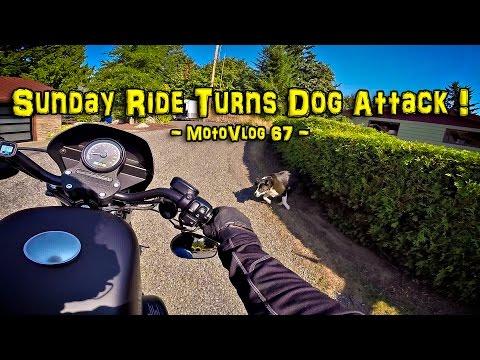 Sunday Ride Turned Dog Attack! - Big Bird is Dead! - Iron 883 | MotoVlog 67