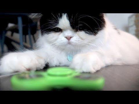 CAT vs. FIDGET SPINNER