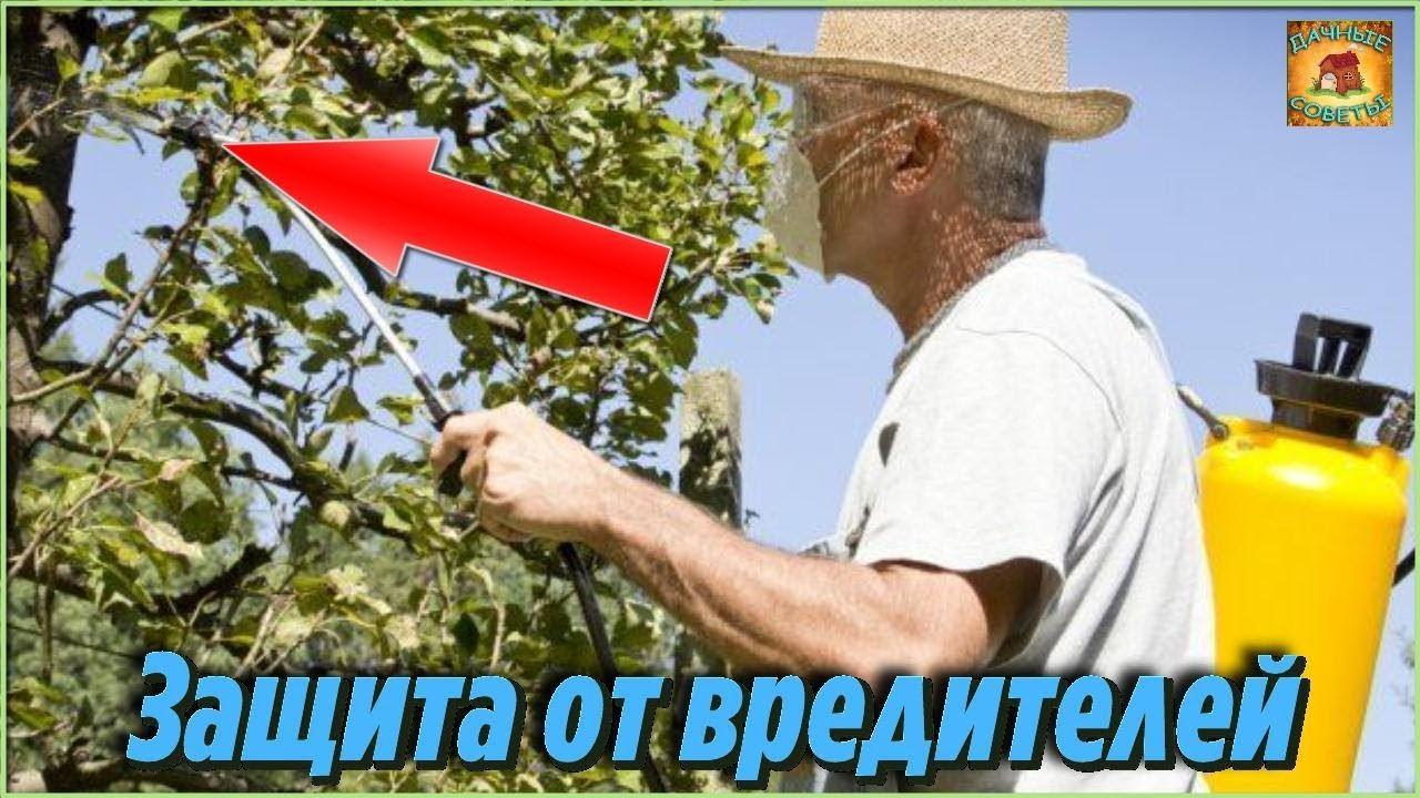 Обработайте этим раствором деревья и кустарники. Защита растений от вредителей и вы всегда с урожаем