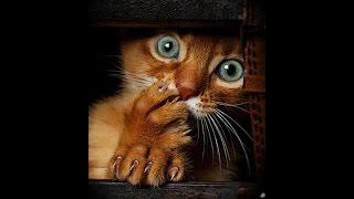 Видео приколы про кошек! Испуганные кошки Подборка №2.