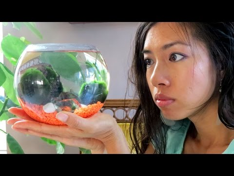 What A REAL MARIMO, How To PROPAGATE + Marimo ADOPTION!?