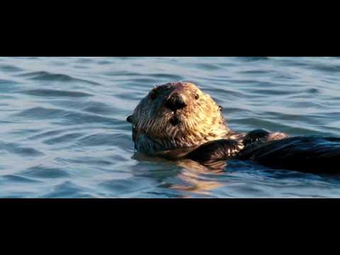 Disney's Ocean - Official Movie Trailer #2 Insider