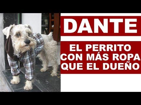 Dante: El Perrito con mas ropa que el dueño | Tu Mascota TV
