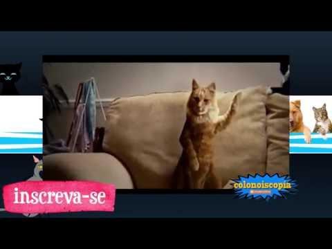 gatos dançando, Dancing Cats Compilation