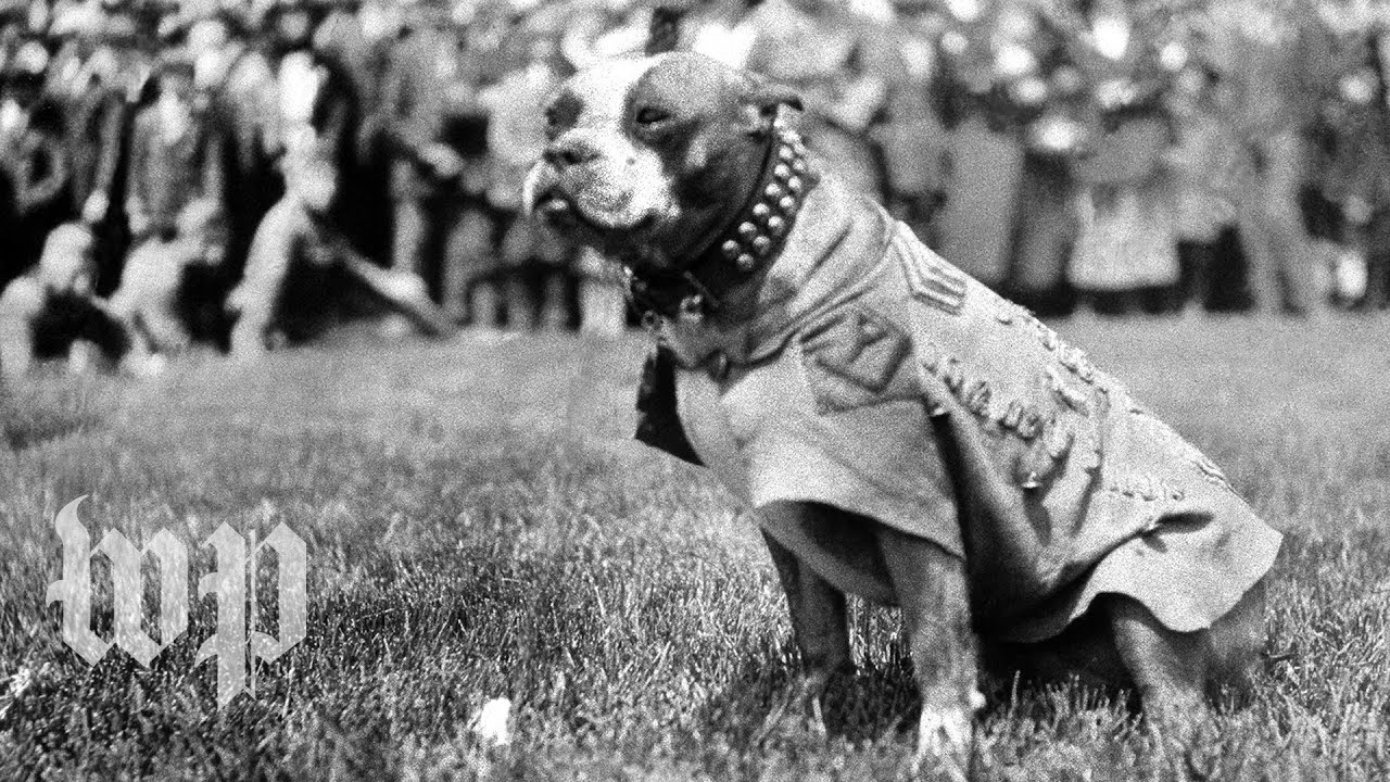 Are Military Dogs War Heroes Or Just