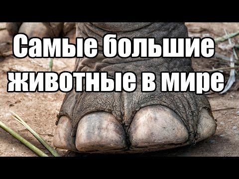 Самые большие животные в мире | Интересные факты