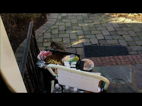 Fat Squirrel Caught On Video Stealing Goodies
