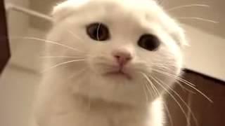 Süße Katze Miaut!