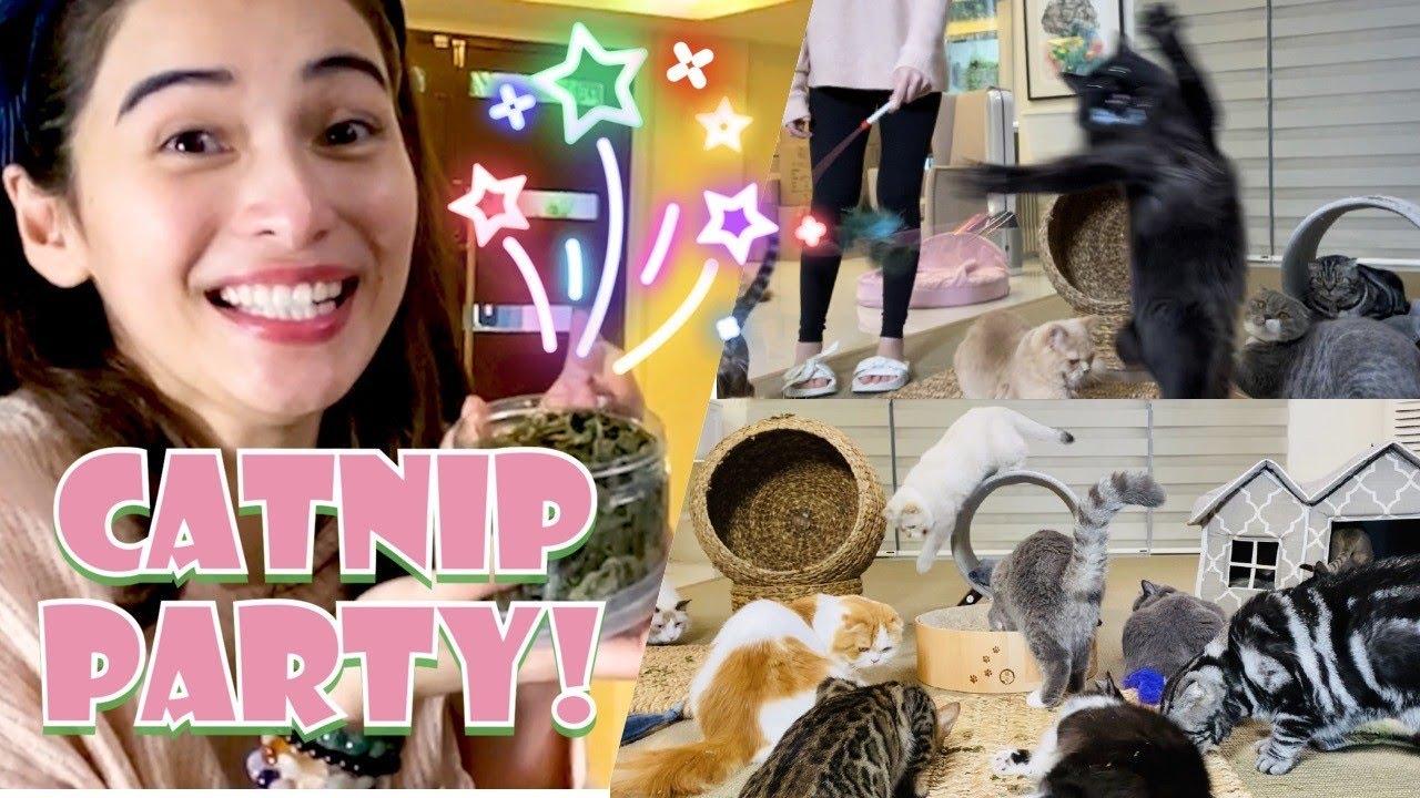 Catnip Party!