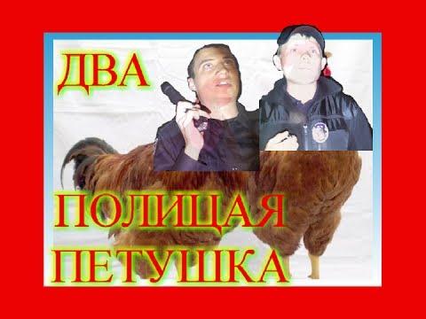 Два Киевских полицая ПЕТУШКА в область залетели. июнь 2017