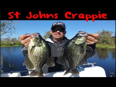 St Johns River Crappie Fishing