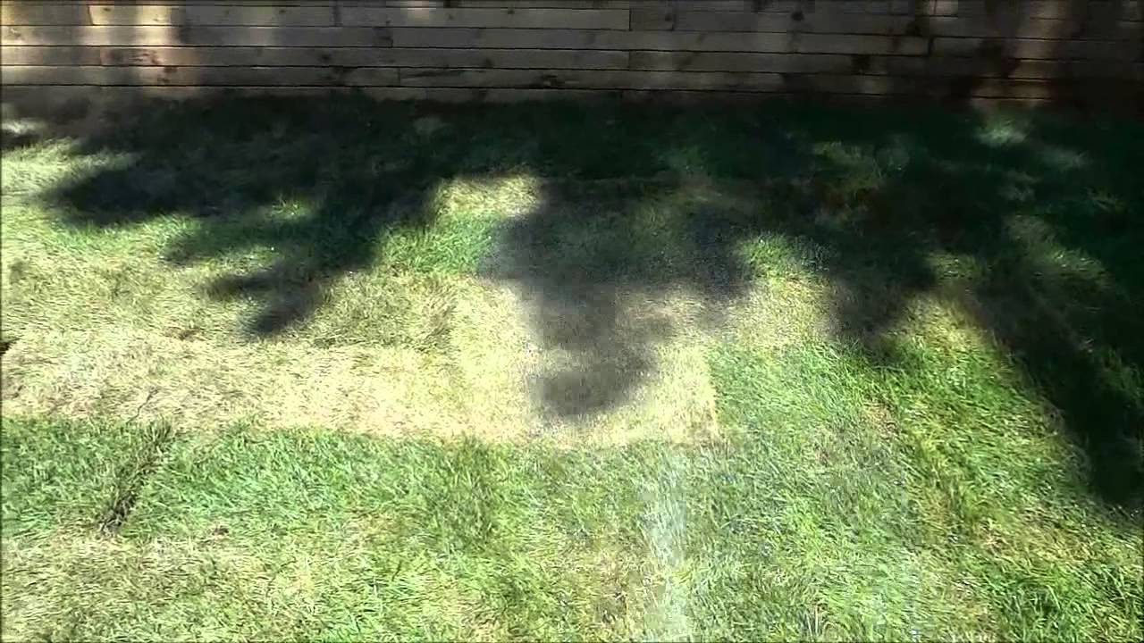 Diy Sod How To Care For Sod Diy Landscaping Youtube