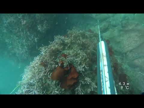 Oregon Spearfishing