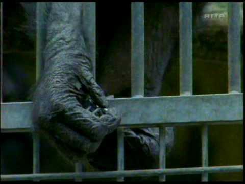 Chimpanzés dans le couloir de la mort -  1/6 - Chimps on death row poster