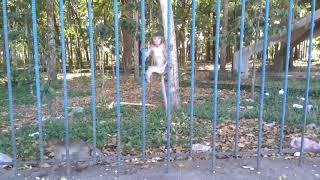 Khỉ soi gương dọa người.