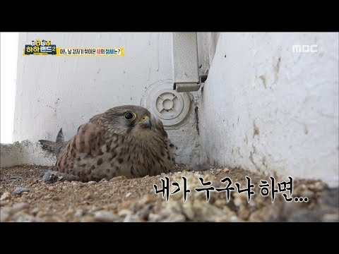 [Haha Land 2] 하하랜드2 -There is a special bird in the apartment 20180516