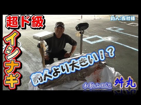 釣人より大きな魚!? 西村様が白浜の沖で釣り上げた超級のイシナギ【和歌山田辺 舛丸】