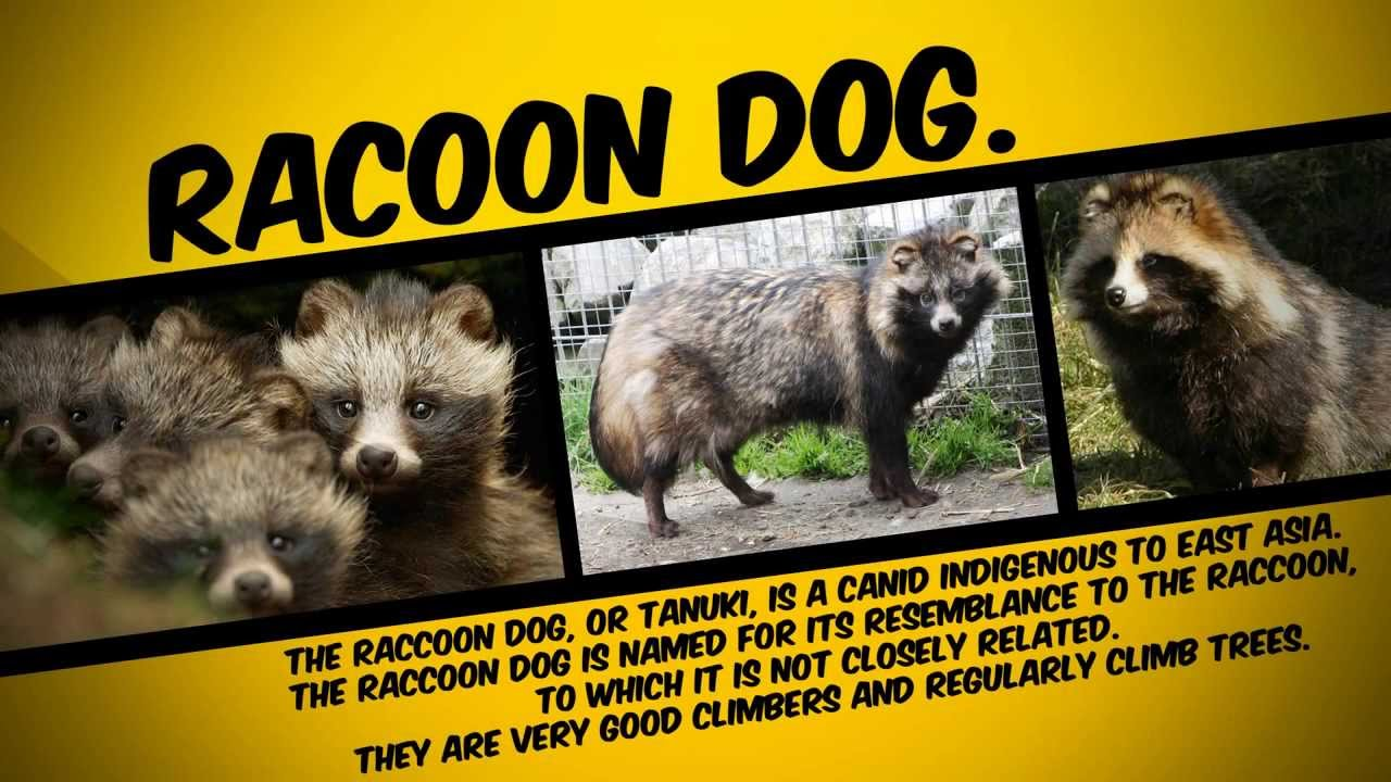 Unthinkable Facts / 13 Animals You Didn't Know Exist ...