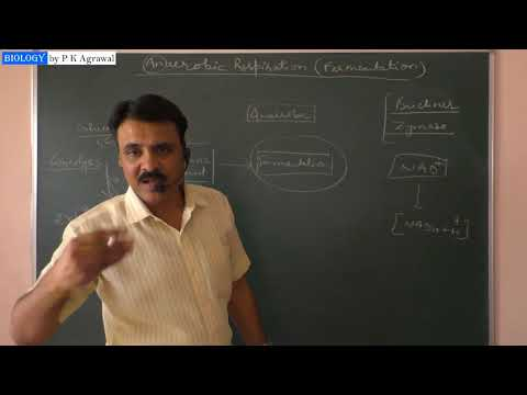 Anaerobic respiration (Fermentation) : Simplified by Dr P K Agrawal