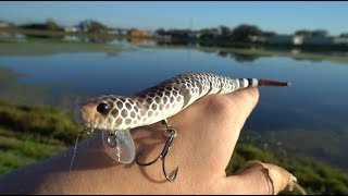 Fishing NEW Snake Lure For Florida Pond Bass - Does It Work?