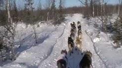 The Aliy Cam:  Iditarod Nikolai