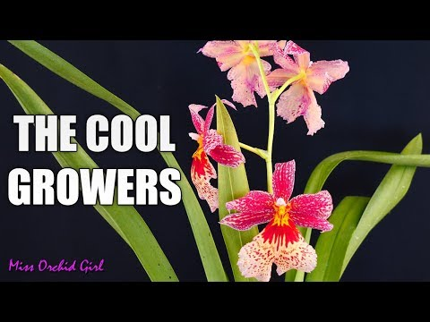 Cool Growing Orchids