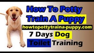Louie The Beagle - How To Potty Train Your Puppy! Explained In 60 Seconds!! - Louie The Beagle