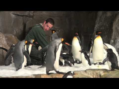 Dolphin & Penguin Feeding Time