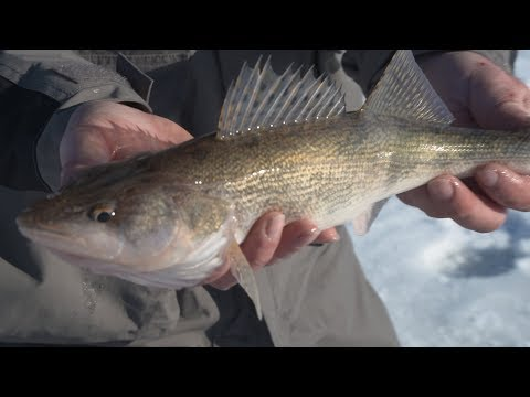 Ice Fishing Lake Oahe WALLEYE And SAUGER - Jason Mitchell Outdoors