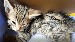 Не оставляйте на улице умирающих котят  Алиса живи save a lonely kitten Жалко до слез