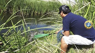 Pesca de Tilapias & Mojarras - Grabado todo en 4K