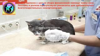 Обследование бездомного кота из приюта с циститом и мочекаменной болезнью Прием у ветеринара