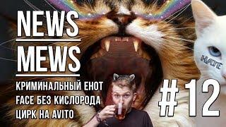 News Mews #12. Мартовское безумие с Данилой Поперечным