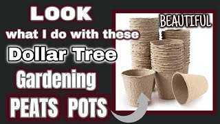 LOOK what I do with these Dollar Tree GARDENING PEATS POTS | BEAUTIFUL DIY