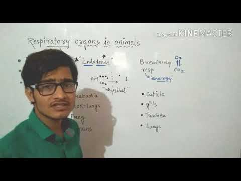 Respiratory Organs In Various Animals.