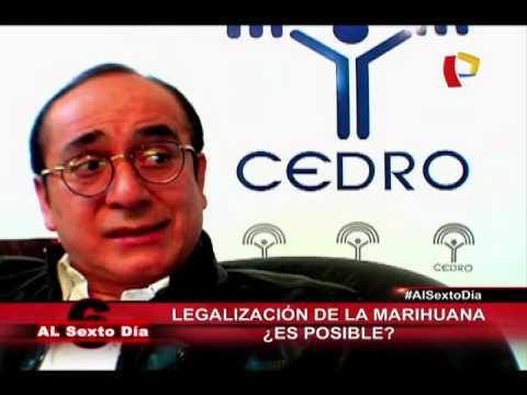 Se Enciende El Debate: ¿Es Posible Legalizar La Marihuana En Perú?