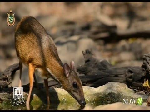 ถ่ายภาพนกและสัตว์ป่าที่บ่อน้ำนกบ้านมะค่า  (11-6-59)