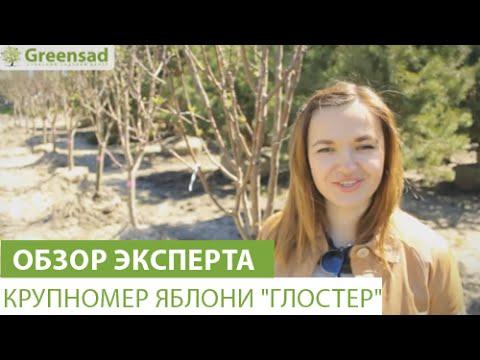 Хорошие виды семян болгарского перца: как выбрать их для