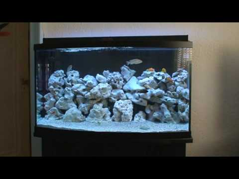 joe malawi aquarium youtube. Black Bedroom Furniture Sets. Home Design Ideas