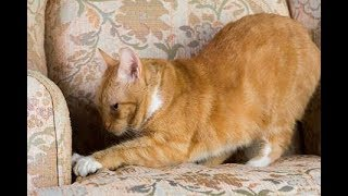 video - Home Wrecking, Ripping, Scratching Cats