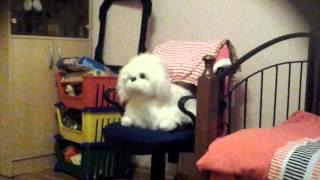 Рассказы о животных серия 3 Собака