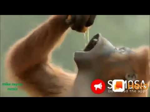 Monkey Dance Mamma Ek Peg La