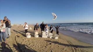 Huntington Beach Dove Release Funeral 7l4 903-6599