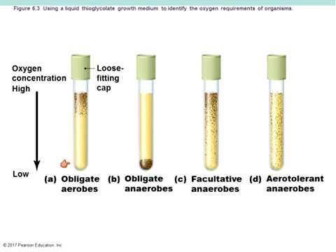 Chapter 6 Microbial Growth Bauman Textbook