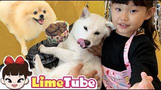 라임의 뽀뽀 간식 만들기 | 강아지 먹방 | 간식연구소 시바견 곰이탱이여우 생일에 초대 받았어요!  Dog Reviewing Cake Mukbang