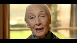 Dr. Jane Goodall on Recycling Cell Phones