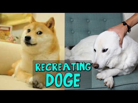RECREATING DOGE - Pet Tag!