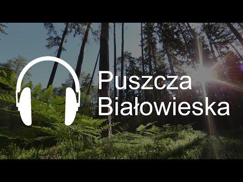 Przerwa na las - Puszcza Białowieska