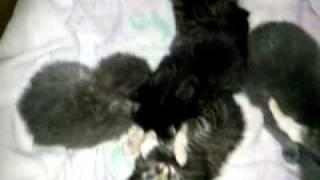 котятам 2,5 недели