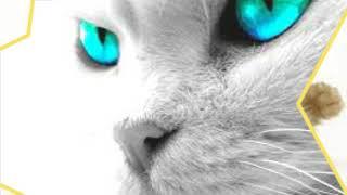 Слайд шоу под песню кошка это дикий зверь!